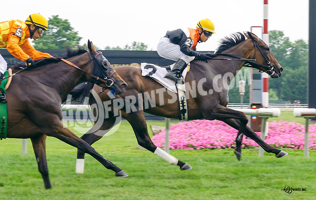 Last Resort winning at Delaware Park on 7/9/16
