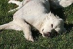 Earthly Companions Domestic, horses, cat, dog, sheep, fish, cows, white, black, brown,