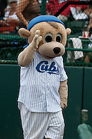 Daytona Cubs Mascot Cubbie  before the game against the Tampa Yankees at Jackie Robinson Ballpark on April 19, 2012 in Daytona Beach, Florida. (Scott Jontes / Four Seam Images)