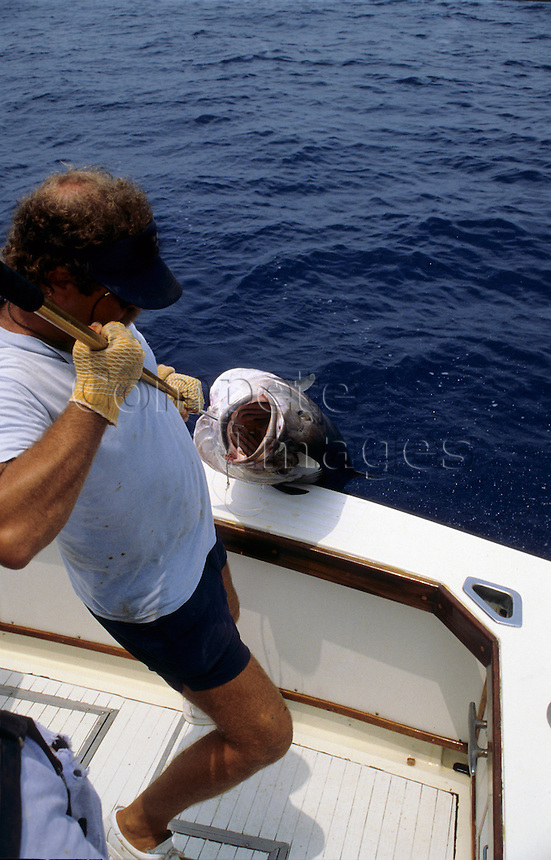 Man hauling a large fish onto his boat