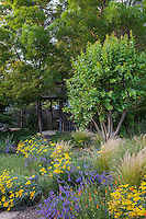 Mixed border with annuals, perennials, grasses, and small multi-trunk Crepe Myrtle tree sheltering back yard gazebo in Habets garden, Pleasant Hill, California