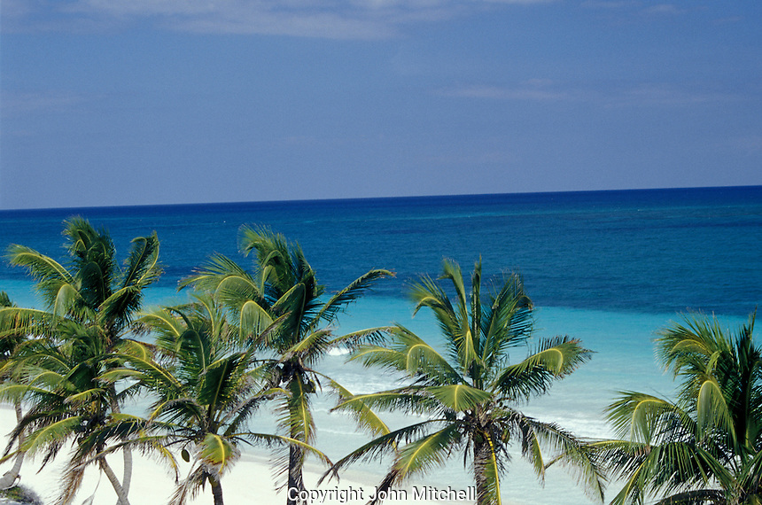 A palm tree lined beach in the Sian Ka'an Biosphere Reserve, Quintana Roo, Mexico