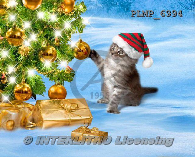 Marek, CHRISTMAS ANIMALS, WEIHNACHTEN TIERE, NAVIDAD ANIMALES, photos+++++,PLMP6994,#XA# cat  santas cap,