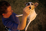 Jack Russell Terrier in backyard jumping up for treat