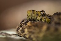 Ecuador reptiles 02