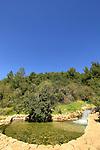 Israel, Upper Galilee, Ein Ramiel in Moshav Sheffer