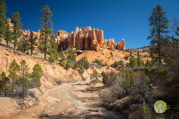 Mossy Cave, Bryce Canyon National Park. Utah. Bristlecone pine trees.