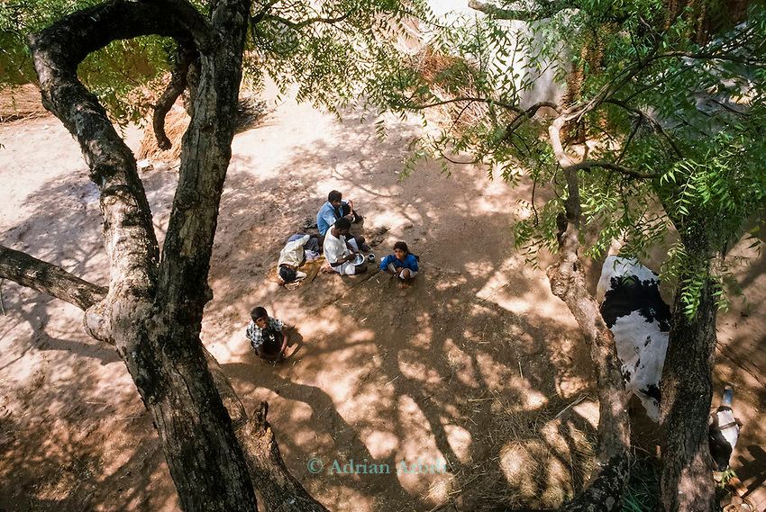 A rural village in the Deccan Development society standing under a Neem tree. Deccan Plateau, Central India.<br /> The  Neem tree has  huge variety of uses.