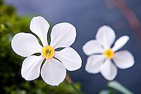 Spring flowers.