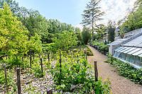 France, Indre-et-Loire (37), Amboise, château Gaillard, les vignes et la serre adossée