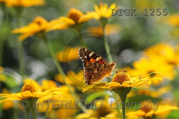 Gisela, FLOWERS, photos(DTGK1255,#F#) Blumen, flores, retrato