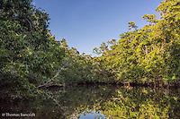 Mangroves line Barratt Creek.