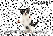 Kim, ANIMALS, REALISTISCHE TIERE, ANIMALES REALISTICOS, cats, photos,+Black-and-white kitten, Loona, 9 weeks old, with paw print background,++++,GBJBWP42564,#a#
