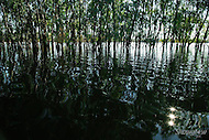 Image Ref: W020<br />