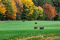 Hay bales in an an autumn field, Brandon, Vermont, USA.