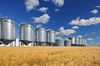 Grain bins and wheat<br /> Rosenhof<br /> Saskatchewan<br /> Canada