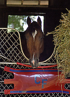 Tim the Tiger (Nashua - Rose Court) - one of my favorite horses...between his looks, name, pedigree (Nashua), and fast start as a racehorse (four-time stakes winner at two)..he was the whole package.