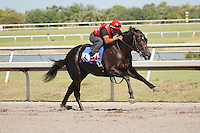 #106Fasig-Tipton Florida Sale,Under Tack Show. Palm Meadows Florida 03-23-2012 Arron Haggart/Eclipse Sportswire.