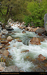 Lower Tenaya Creek in Spring Flood, Yosemite National Park