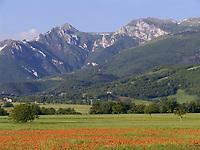 ITA, Italien, Marken, Landschaft mit Mohnfeld vor den Sibillinischen Bergen | ITA, Italy, Marche, landscape with poppy field and Sibillini mountains