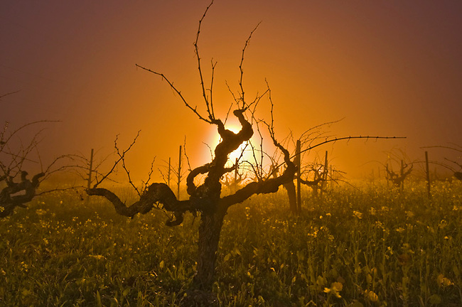 Vine is time exposure lit from streetlight