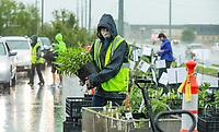 Tina Denney, a member of the Benton County Master Gardeners, from Garfield fills an order Friday, May 15, 2020, during the 7th annual Benton County Master Gardeners plant sale at the Benton County Extension Office in Bentonville. Members of the Master Gardeners filled orders for customers as they drove through. The sale continues 10 a.m. to 4 p.m. Saturday. <br /> Go to nwaonline.com/200516Daily/ to see more photos.<br /> (NWA Democrat-Gazette/Ben Goff)