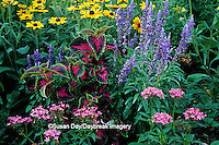 63821-08420 Pink Pentas, Sun Coleus, Blue Victoria Salvia, & Indian Summer Black-eyed Susans   Marion Co.  IL