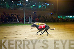 Mileheight Bill (No1) just wins by a neck from Manhattan Beck (No 5) in The Text Alert to your Mobile 525 at Kingdom Greyhound Stadium, Tralee, on Friday night..