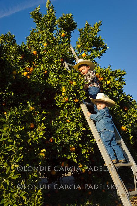Peyton and Jacob picking oranges, San Luis Obispo, California