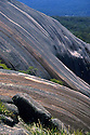Bald Rock monolith, largest exposed granite surface in Australia, 750x500m and 200m high. Bald Rock National Park, New South Wales.