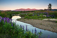Sunset light falls upon the Presidential Range and Mount Washington from the lupine filled banks of the Israel River in Jefferson, New Hampshire.