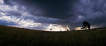 A group of giraffes silhouetted against a stormy sky in Africa.