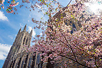 It seems like this Spring's been going on forever! The play of cool and warm colors against the flare of the midday sun grabbed my attention while walking past the Divinity School and Duke Chapel.<br /> <br /> Photo by Bill Snead/Duke Photography #dukephotoaday, #dukechapel, #dukedivinity