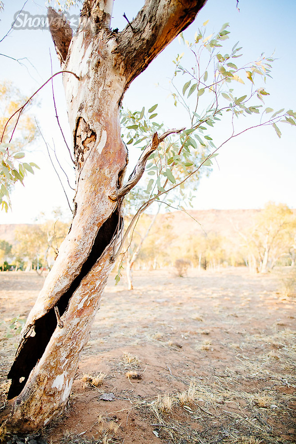 Image Ref: CA632<br />