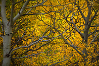 Soft light highlights vibrant autumn colors in East Glacier Park.