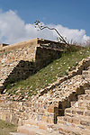 An agave flower spike on the ruins of the East House or Casa de Oriente in the Zapotec city of Atzompa, near Oaxaca, Mexico.