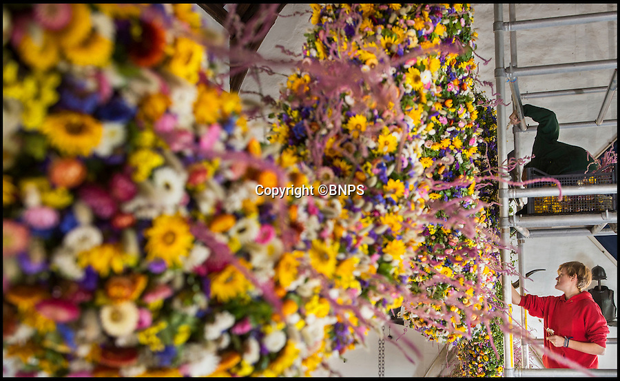 BNPS.co.uk (01202 558833)<br /> Pic: PhilYeomans/BNPS<br /> <br /> National Trust staff put in the last of the 36,000 dried flowers required to dress the amazing Christmas garland of Cotehele house in Cornwall.<br /> <br /> The huge 60 ft garland is hung in the Great Hall each festive season and this year's warm summer has produced a bumper crop of colourful blooms that are all grown locally on the estate.