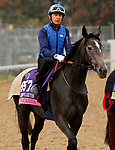 October 30, 2018 : Lily's Candle in preparation for the Breeders' Cup on November 01, 2018 in Louisville, KY.  Candice Chavez/ESW/CSM