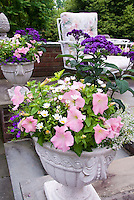 Cement pot container garden of annual petunia, Leucanthemum, Helioptropium heliotrope, bacopa, on stone patio near chair patio furniture, pink and purple color theme, harmonious plantings