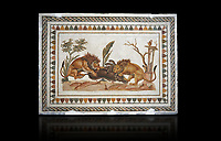 Picture of a Roman mosaics design depicting Lions eating a boar, from the ancient Roman city of Thysdrus. 2nd century AD, House of the Dionysus Proccession. El Djem Archaeological Museum, El Djem, Tunisia. Against a black background