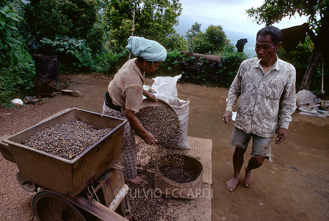Indonesia, Bali, depulping, pulp, coffee, coffea, beans, robusta, variety, organic, natural, shell, machine, dry, process, ripe, cherries, worker, man, woman, couple, group