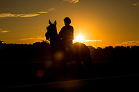 ARCADIA, CA - OCTOBER 06: Horses train at Keeneland Race Course on Opening Day, October 06, 2017 in Lexington, Kentucky. (Photo by Alex Evers/Eclipse Sportswire/Getty Images)