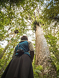 NEW ZEALAND, Northland, Woman below a Kauri Tree, Ben M Thomas