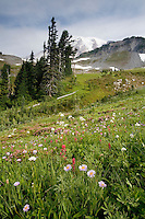 Nature's finishing touches on Mt Rainier NP is found in Paradise's abundant summer flower fields.