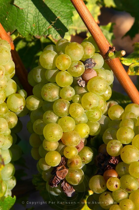 chardonnay beaune cote de beaune burgundy france