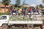 Men Sitting On Back Of Truck Carrying Cabbage And Other Items