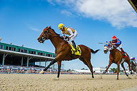 OLDSMAR, FL - JANUARY 21: Sonoma Crush #4 (yellow cap), ridden by Daniel Centeno, crosses the finish line, and wins the 4yr olds and up #1 claiming race, on Skyway Festival Day at Tampa Bay Downs on January 21, 2017 in Oldsmar, Florida. (Photo by Douglas DeFelice/Eclipse Sportswire/Getty Images)