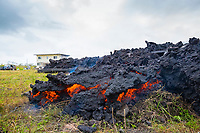 lava originating from Pu'u O'o on Kilauea Volcano, and emanating from a fissure in Leilani Estates, near Pahoa, Puna, Big Island, Hawaii, USA, enters a property off of Pohoiki Rd as a thick flow of a'a lava that pushed the house over then set it on fire