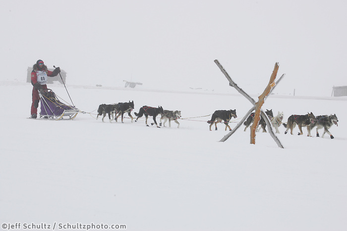 Lance Mackey on the trail nearing Nome in foggy conditions.    End of the  2005 Iditarod Trail Sled Dog Race.