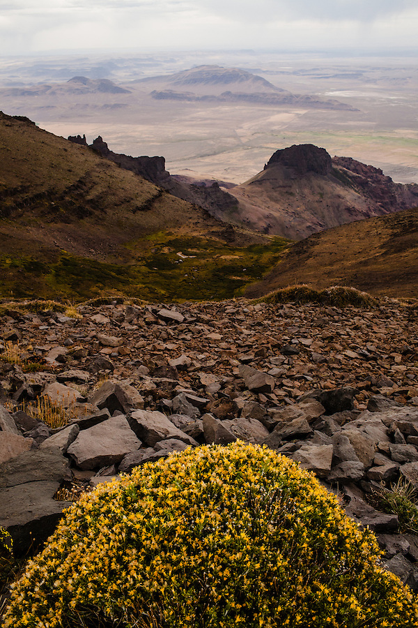 A bush of yellow flowers is seen among a barren and rocky landscape while viewing a distant rainstorm on Steens Mountain in Southeast Oregon.